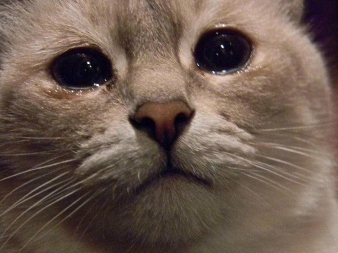 читай тока не плачь фото сентября молодые